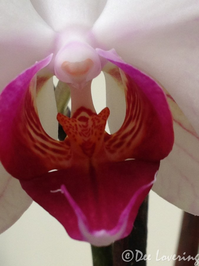 Orchid monster