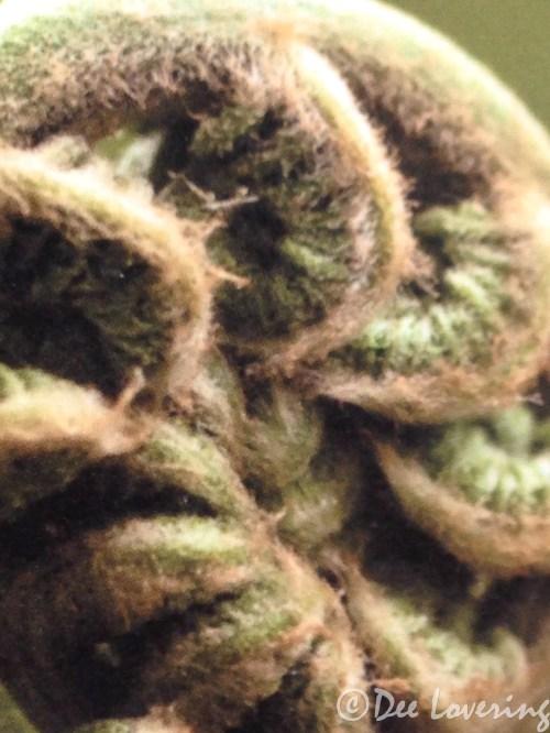 Fern frond