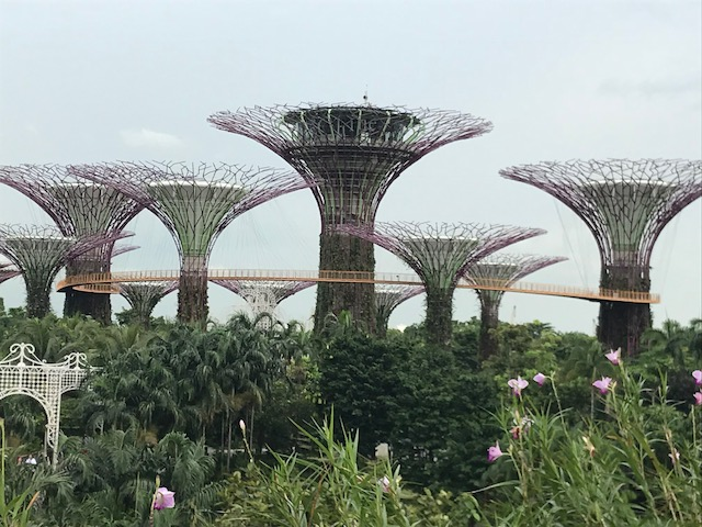 Garden in the Bay